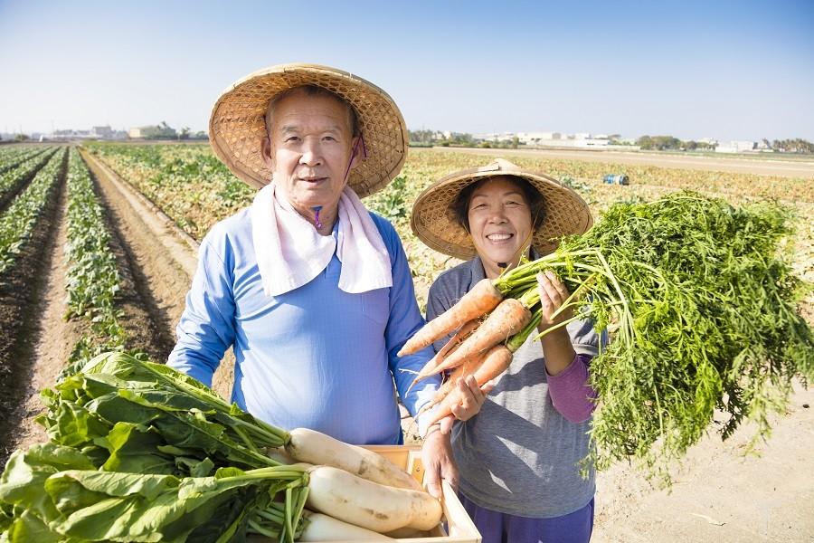 ?2019年中央一号文件发布:大力发展现代农产品加工业,加强农产品体系建设