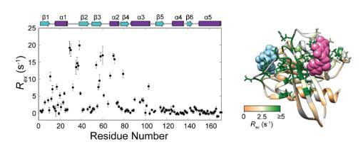 揭示的Ras协同构象动态网络涵盖重要变构抑制剂结合位点