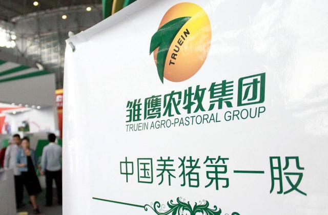 """中国养猪第一股雏鹰农牧股价大涨73%,曾曝""""没钱买饲料,于是猪饿死了""""消息"""