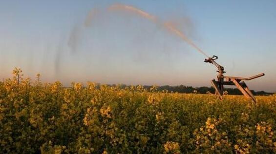 中国海关多次从加拿大进口的油菜籽中检出危险性有害生物