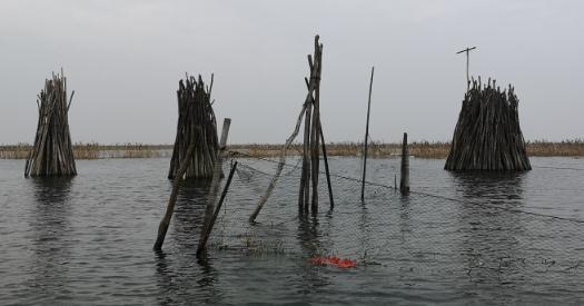 洪泽湖退渔还湿:围网养殖塘口拆除对渔民影响