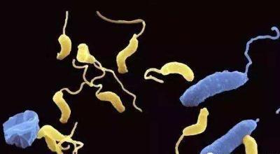 蛭弧菌对异育银鲫养殖塘的生物防治作用