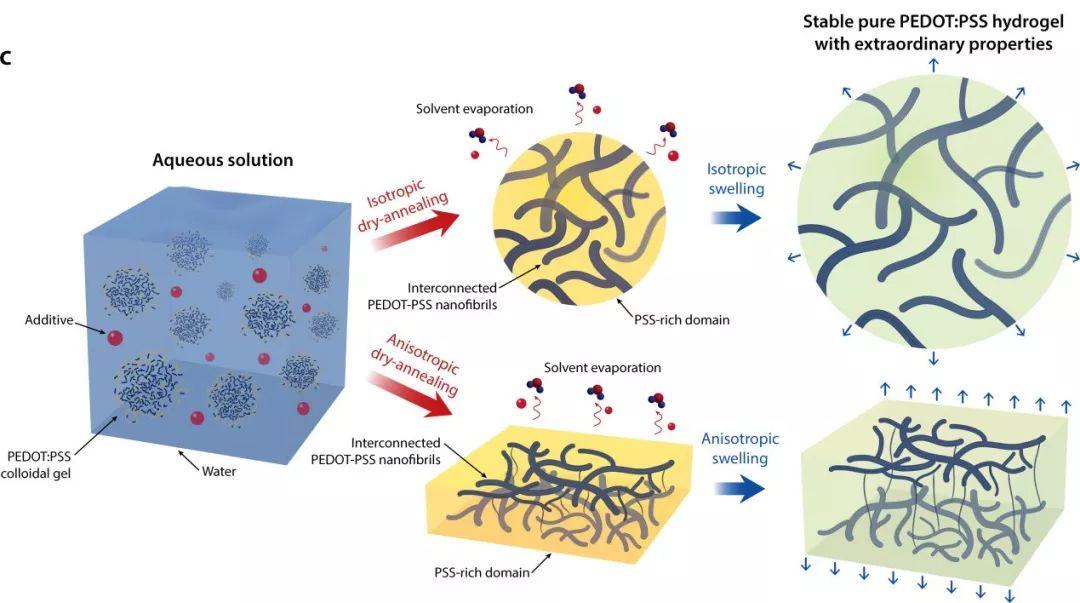 赵选贺教授团队与徐景坤教授团队合作研发出高性能导电聚合物水凝胶
