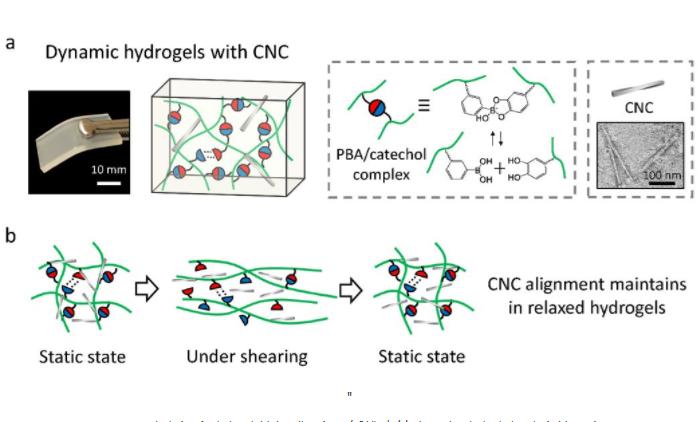 ?Kai Zhang教授团队利用动态复合水凝胶制造出可调控双折射材料