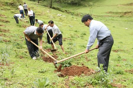 植树节种什么树比较好?如何提高植树成活率?