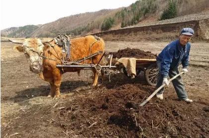 有机肥制作方法、生产设备、价格,有机肥为植物提供什么