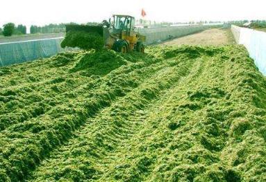 《关于推广裹包式青贮技术推动农牧业新旧动能转换的建议》