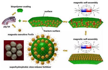 """磁性自组装的方法制备包覆""""空气外衣""""的超疏水生物基控释肥料"""