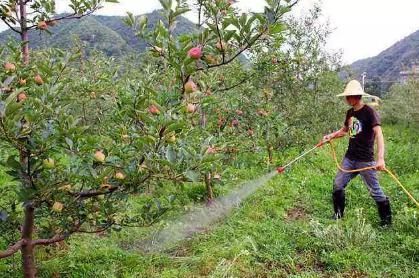 对苹果园浇水的看法与建议