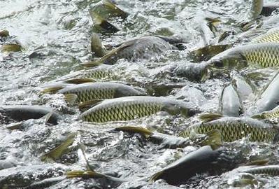 鱼体健康状况的评价方法研究进展