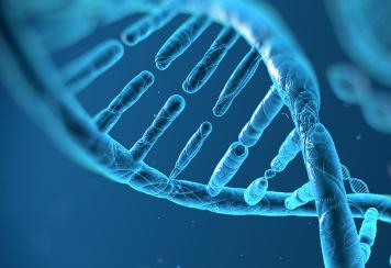 热休克蛋白与突变p53结合会促进致癌能力
