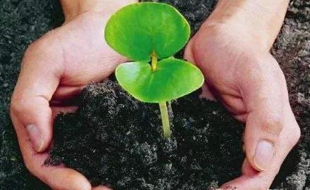 有机肥生产和施用奖励补贴政策汇总