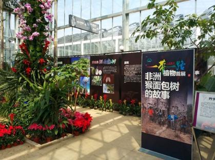 北京植物园热带温室展示非洲猴面包树的果实、种子
