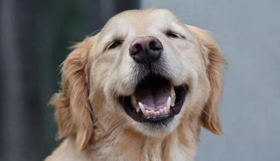 狗鼻子能闻出人类肺癌:准确度97%