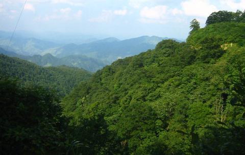 云南林业发展规划与现状