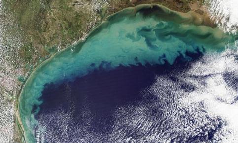 全球海洋酸化的科学研究进展与政府应对策略