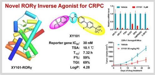 前列腺癌临床耐药新型RORγ抑制剂XY101