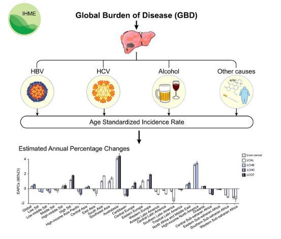不同地区的肝癌发病模式