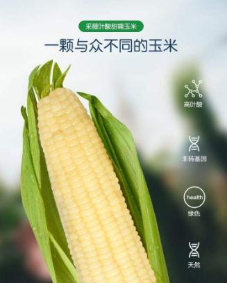 对抗隐性饥饿,张春义团队专注于作物营养强化方面的研究