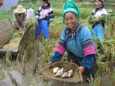 """哈尼梯田""""稻渔共作""""工程创造百亿元生产价值"""