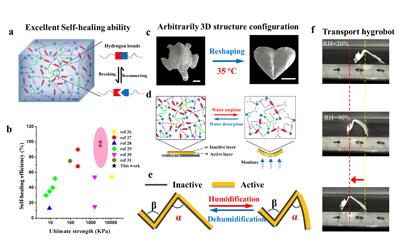 四川大学合成生物基聚酯材料,具有快速自修复性能