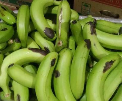 香蕉水烂是什么原因引起的?怎么预防?
