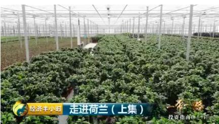 荷兰成全世界第二大农业出口国,中国盆景在欧洲卖火了