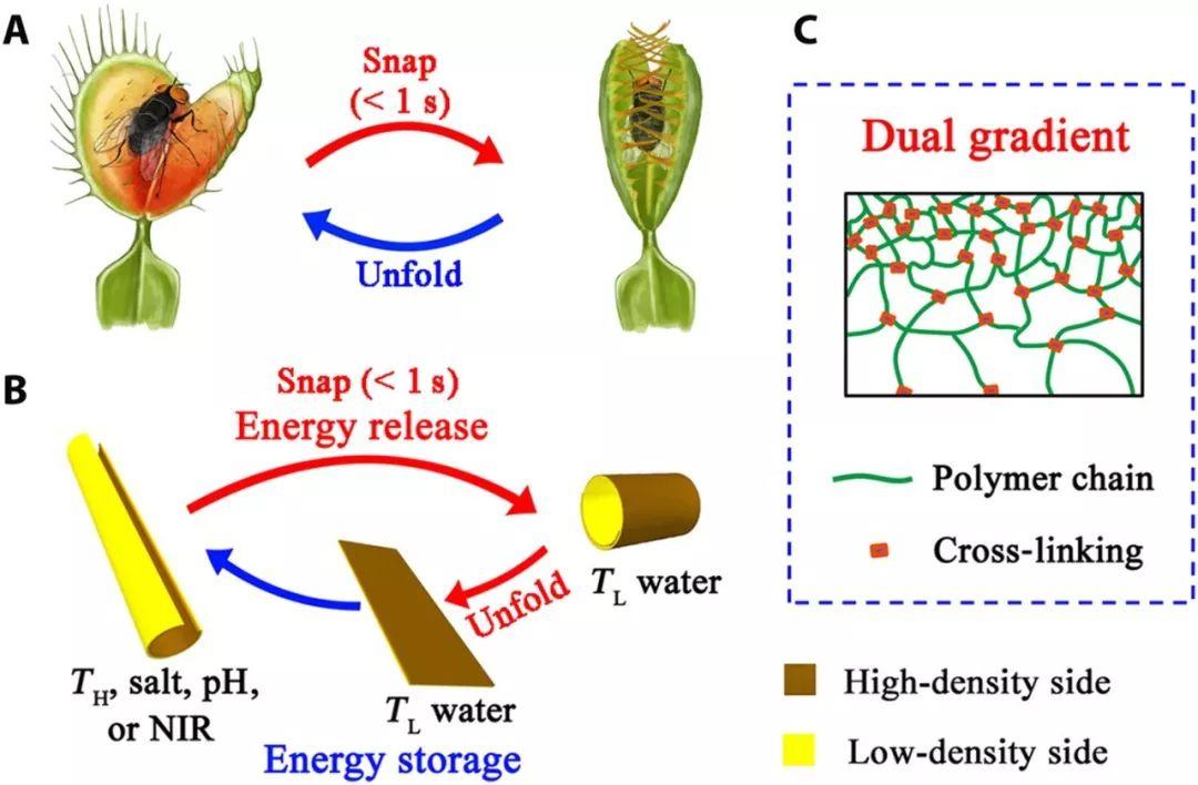 青岛大学隋坤艳教授课题组合成可转换的刺激响应凝胶材料