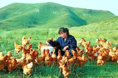 京蒙科技帮扶活动推动北京油鸡产业扶贫项目落地通辽