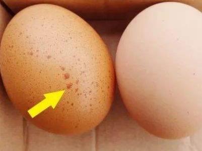 """鸡蛋保鲜的小窍门是什么?专家:保存鸡蛋有""""四不要"""""""