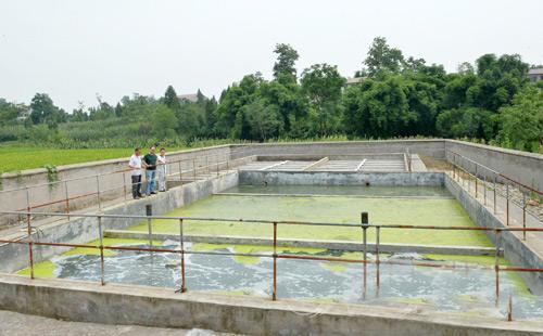 悬浮填料强化脱氮技术污泥形式和微生物特性、应用及展望