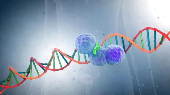 PARP抑制剂合成致死可以把癌细胞送上自取灭亡的路