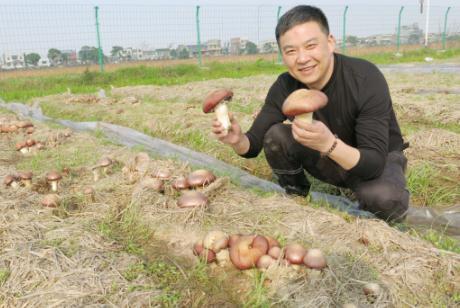 """邓述东""""一亩田脱贫""""项目首次推广成功——富硒米+稻草种菇(赤松茸)""""循环生态高效种植模式"""