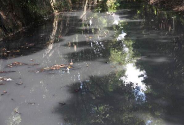 上海浦东新区五灶港北支河、嘉定区市心河水质反复出现黑臭:4名河长被点名通报