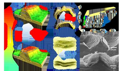 北京化工大学潘凯研究员团队制备出具有连续梯度褶皱结构的柔性压力传感器