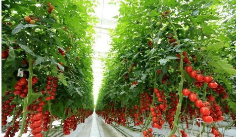 北京京农智慧农业有限公司:打造的现代智慧农业产业园区