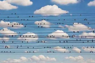 数字音乐产业商业化发展现状及趋势