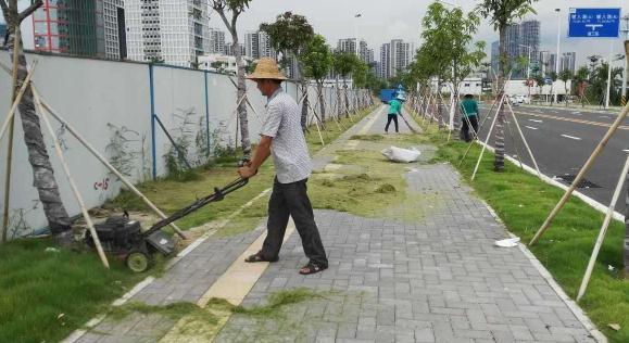 绿化管养新模式:济南市形成完整的城市道路绿地养护管理综合考评体系