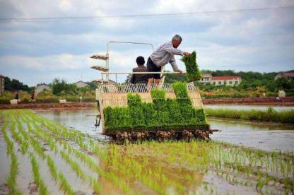 水稻机械化育插秧技术的优势、制约因素、发展策略