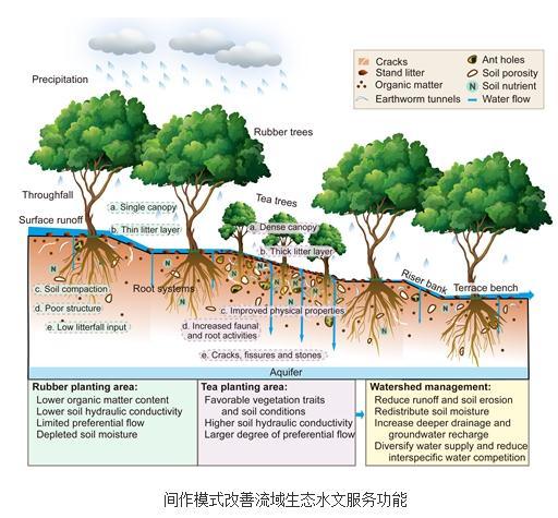 高砾石含量影响土壤水力性质,橡胶间作种植模式可消减水土流失