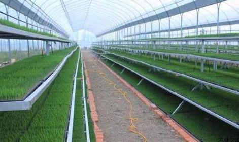 稻麦示范种植:张瑞宏团队建起万亩智能高效优质稻米示范区
