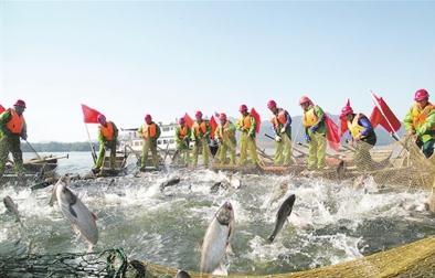 水产养殖业的发展现状:生态渔业模式遍布全国