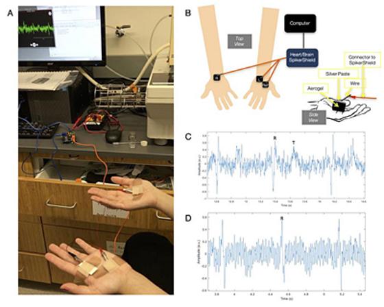 ?鲍哲南教授团队研发出导电性能不受应变影响的可拉伸聚合物导电气凝胶