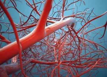 肿瘤抑制基因p53缺失或突变会加重诱发腹主动脉瘤