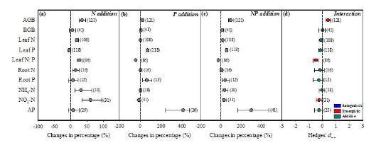 氮磷交互作用如何通过影响植物生长?