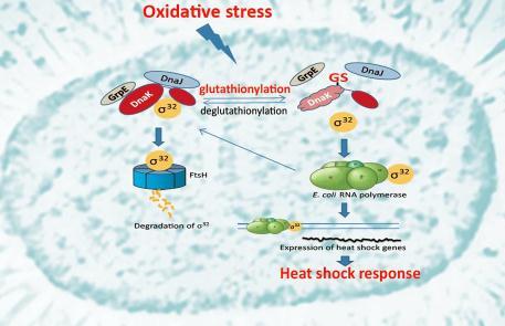 揭示特殊细菌新的σ/抗σ因子的结构功能机制