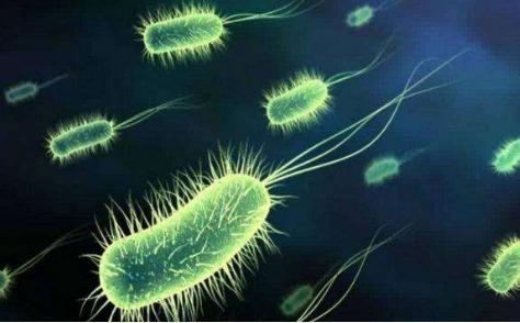除污界贵族菌种硝化细菌的影响因素及控制方法