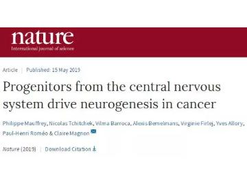 大脑神经前体细胞竟有助于推动前列腺癌的进展