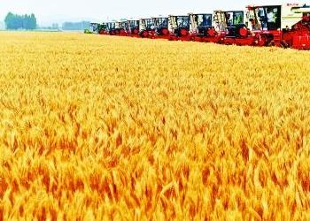 科技助力粮食产业转型升级,从而迈向绿色化、信息化、智能化