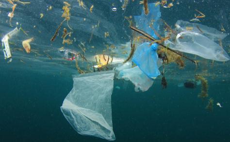塑料微粒可通过大气进入海洋,对沿途的水生态系统造成影响